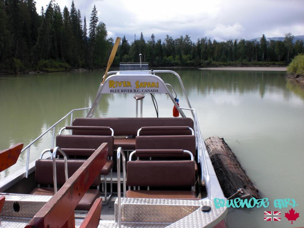 Bear watching boat Canada