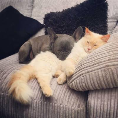 A dog and a cat sleeping