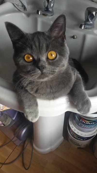 A cat in a sink