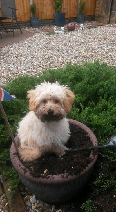A dog in a plant pot