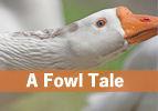 A Fowl Tale