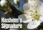 Hashem's Signature
