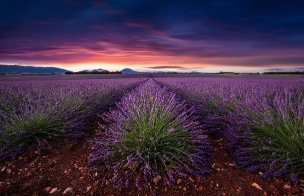 Flame of Doubt by Jorge Maia