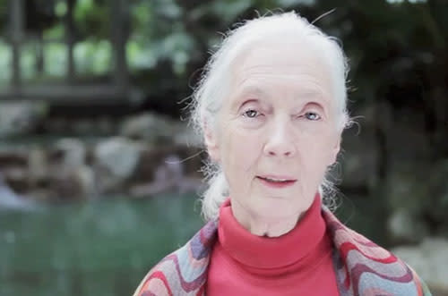 Dame Jane Goodall DBE lends her voice to help the bears