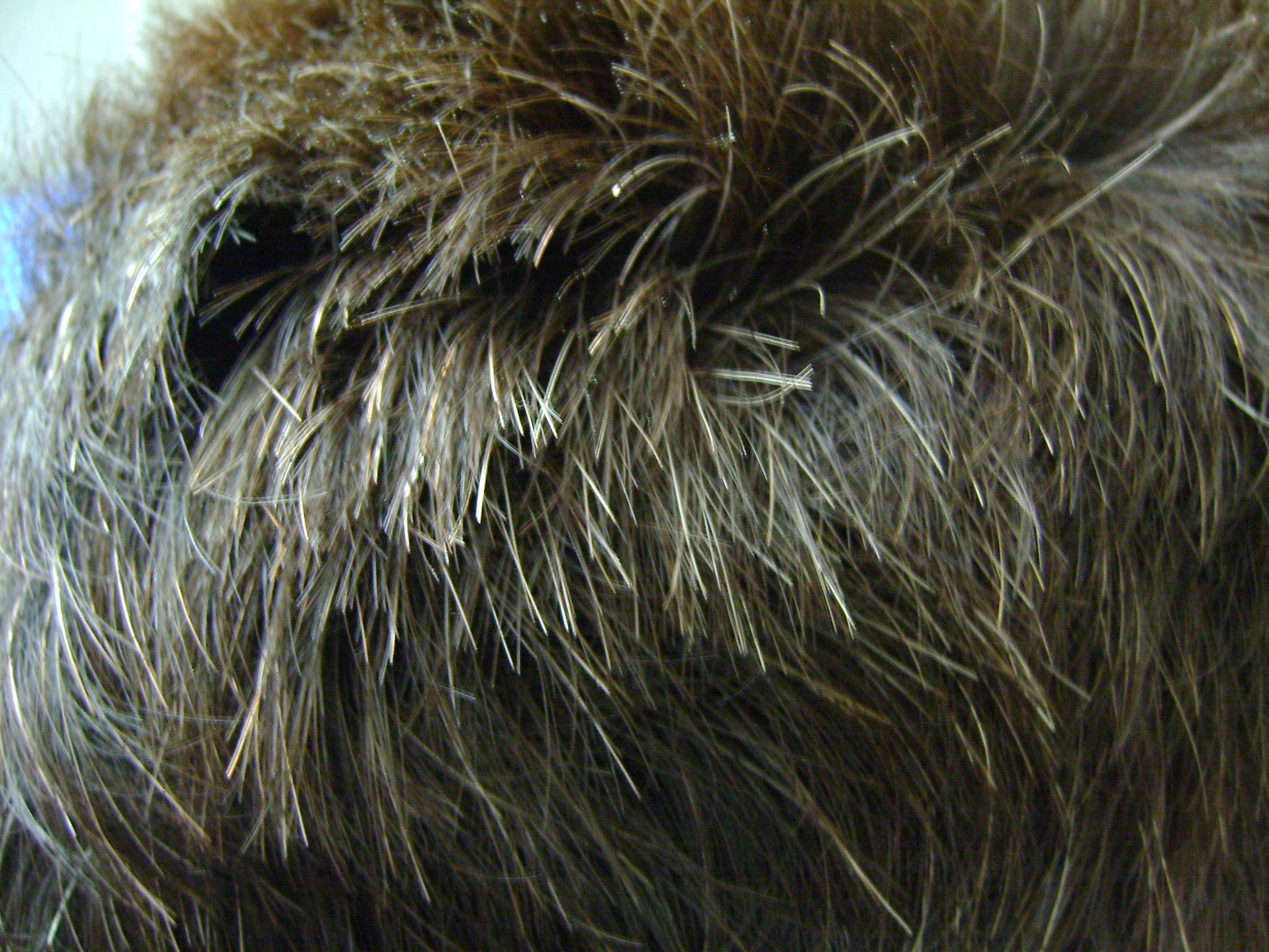 Premature Greying of hair - Canities
