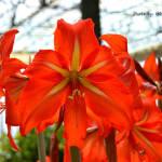 Fotografía en 35mm de una flor de Lisboa