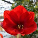 Flor roja y delicada