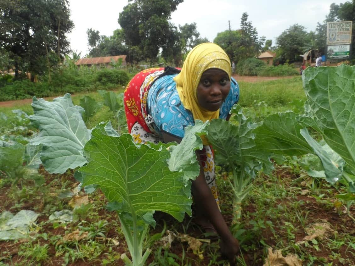 African women removing weeds from her vegetable garden