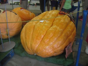 "In Australia they would say: ""now, that's a pumpkin!"""