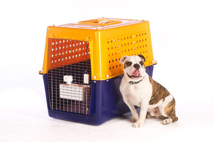 There are more dog breeds out there than there are leaves on trees, so it's easiest to break down your dog crate needs by size. (image credit: jetpets.com.au)