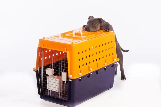 Dog crates need to be well ventilated, have secure latchings and fittings, and – most importantly – be the correct size for your dog. (image credit: jetpets.com.au)