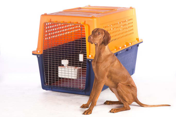 You may find your big boy or girl needs a crate to suit a miniature pony! (image credit: jetpets.com.au)