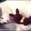 Sleepy Eevee Amigurumi - Pokemon - La Calabaza de Jack