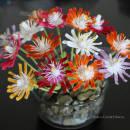 Jewel of Desert Ice Plant Succulents