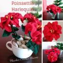 Crochet Poinsettia Harlequin