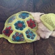 """African flower turtle """"Blanket"""""""