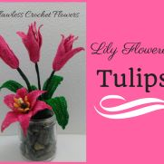 Lily Flowered Tulips