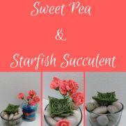 Free Sweet Pea & Starfish Succulent