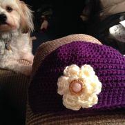 Ladies Beanie hat with flower.