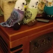 More budgies