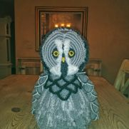 Graycie the Grey North American Owl
