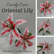 Candy Cane Oriental Lily Flower Pattern
