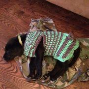 Doggy Sweater for Loretta