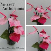 Princess Anthuriums