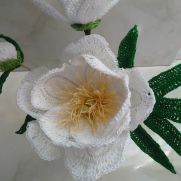 Lotus Queen Peony