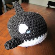 Shachi the Orca