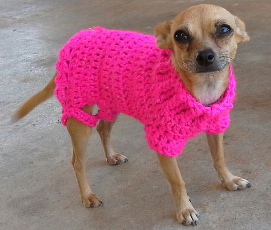 Sweetness - Crochet Dog Sweater