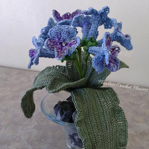 Harlequin Lace Trumpet African Violet