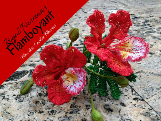 Royal Poinciana, Flamboyant, Delonix Regia