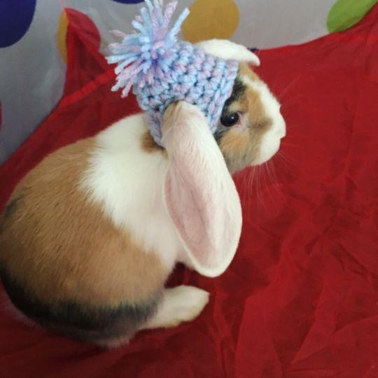 Crochet Pom Pom Hat for Bunnies