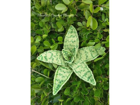 Demi Aloe Succulent