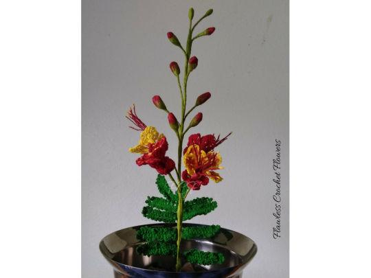 Pride Of Barbados Peacock Flower (Dwarf Poinciana)