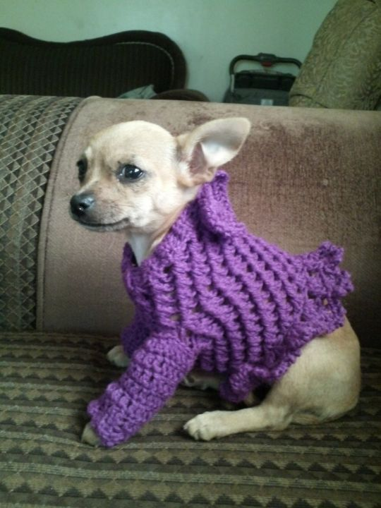 sweet sweater for my chihuahua!