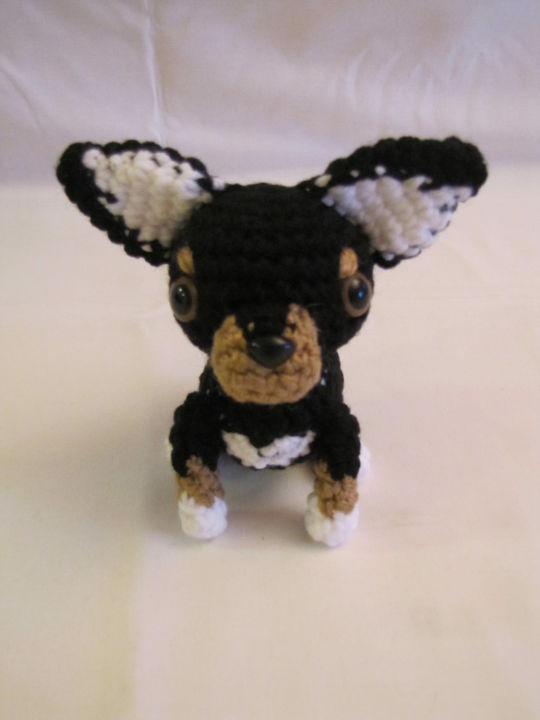 CHIHUAHUA - BLACK & BROWN