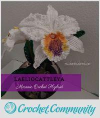 Laeliocattleya Orchid