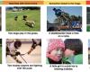 Google Research : Tweak Image Recognition Dengan D...