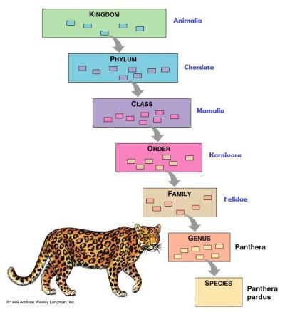 Image of: Plantae Pada Tahun 1735 Linnaeus Menerbitkan Buku Berjudul Systema Naturae Yang Sangat Berpengaruh Bagi Keilmuan Biologi Pada Saat Itu Dimana Dalam Bukunya Teknosains Biologi Sistem Klasifikasi Mahluk Hidup