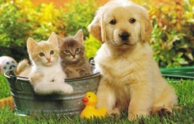 Chat ou chien, qui est le plus intelligent ?