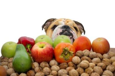 L'été est un moment où les fruits sont abondants. Pensez à ajouter des fruits dans la nourriture de votre loulou, en enlevant toujours pépins et noyaux.