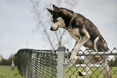 Les 10 principales causes de mort accidentelle chez les chiens : comment les prévenir ?