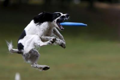7 manières de défouler un chien très (trop ) actif !