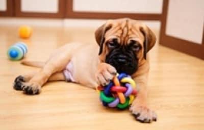 7 conseils pour bien vivre en appartement avec son chien