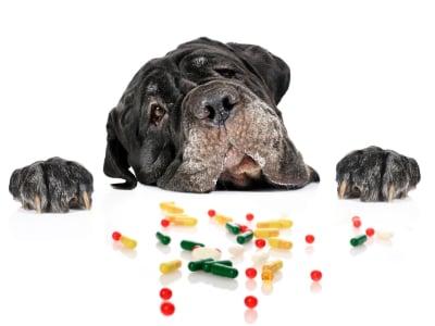 Quels médicaments humains sont dangereux pour nos chiens ?