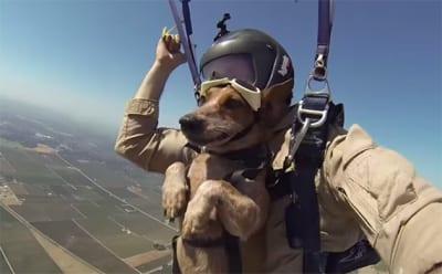 Tandem chien-humain en parachute : qu'est ce que ça donne ?