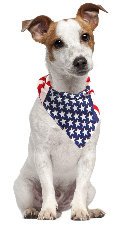 pet bandana - American flag.jpg