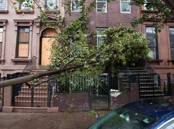 tree brought down by hurricane sandy in brooklyn